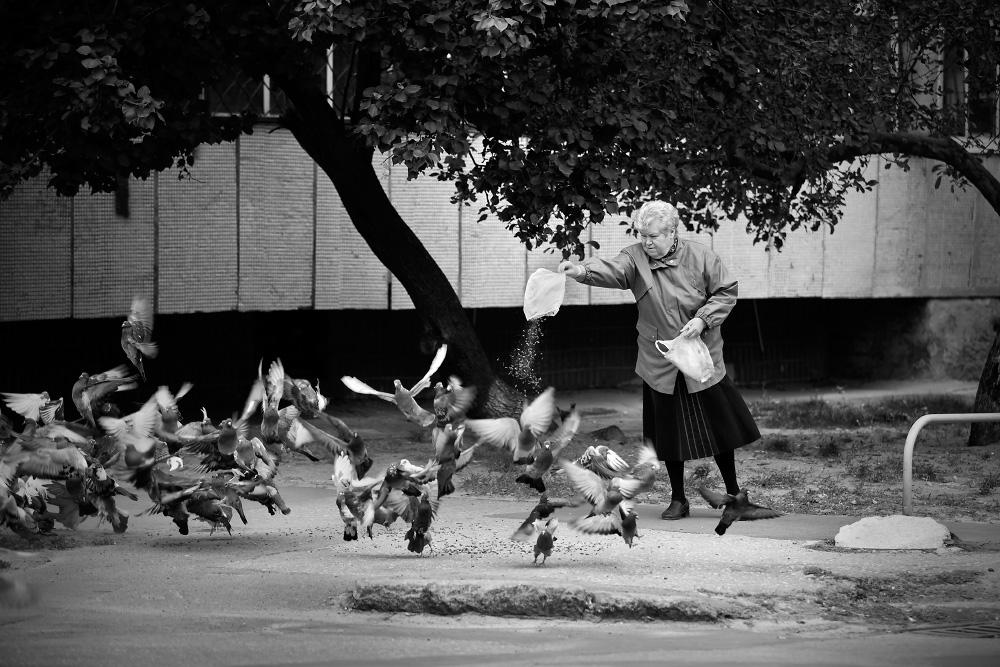 Покормить голубей...